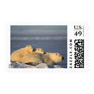 Polar bear sow lying down with spring cubs on postage