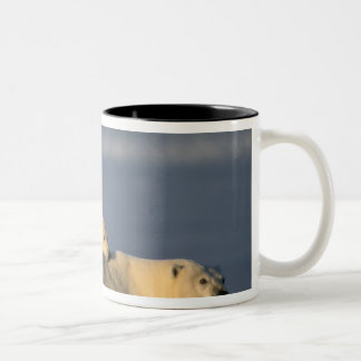 Polar bear sow lying down with spring cubs on Two-Tone coffee mug