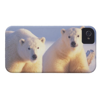 Polar bear sow with cub on pack ice of 1002 iPhone 4 cover