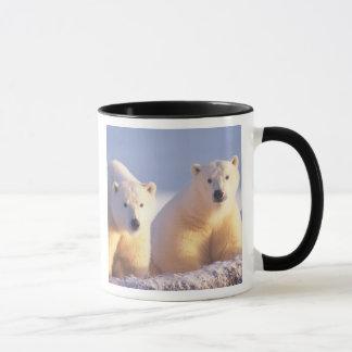 Polar bear sow with cub on pack ice of 1002 mug