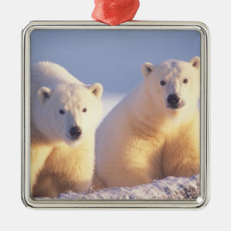 Polar bear sow with cub on pack ice of 1002 square metal christmas ornament