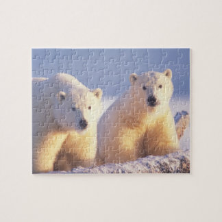 Polar bear sow with cub on pack ice of 1002 puzzle