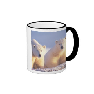 Polar bear sow with cub on pack ice of 1002 ringer mug