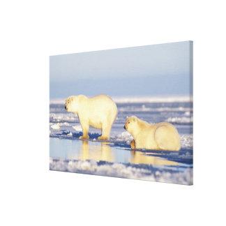 Polar bear sow with cub, pack ice, coastal canvas print
