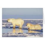 Polar bear sow with cub, pack ice, coastal card