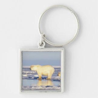 Polar bear sow with cub, pack ice, coastal keychain