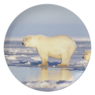 Polar bear sow with cub pack ice coastal party plate