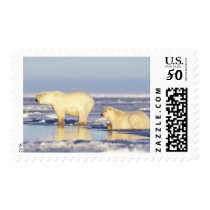 Polar bear sow with cub, pack ice, coastal postage