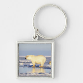 Polar bear sow with cub, pack ice, coastal Silver-Colored square keychain
