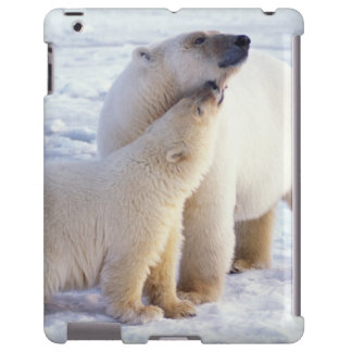 Polar bear sow with cub, pack ice of the