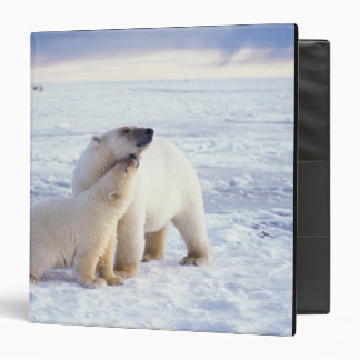 Polar bear sow with cub, pack ice of the binder