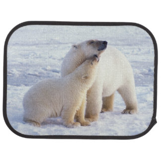 Polar bear sow with cub, pack ice of the car mat