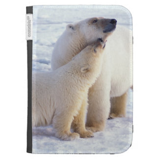 Polar bear sow with cub, pack ice of the cases for the kindle