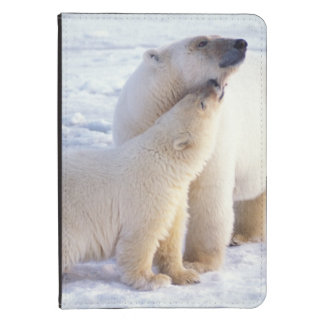 Polar bear sow with cub, pack ice of the kindle 4 cover