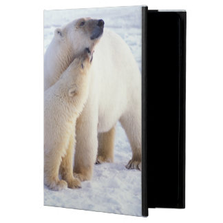 Polar bear sow with cub, pack ice of the case for iPad air