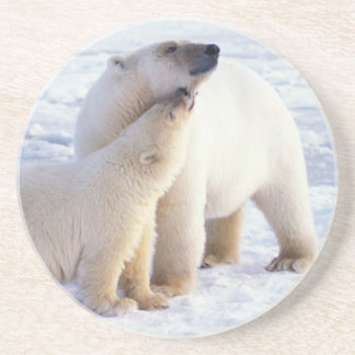 Polar bear sow with cub pack ice of the coaster