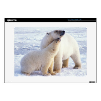 Polar bear sow with cub, pack ice of the decal for laptop