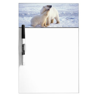 Polar bear sow with cub, pack ice of the Dry-Erase board