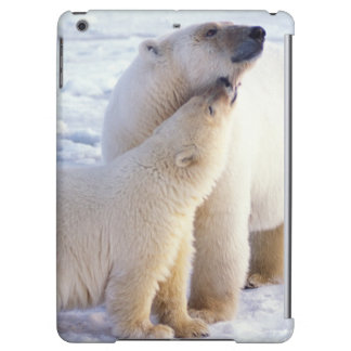 Polar bear sow with cub, pack ice of the iPad air cases