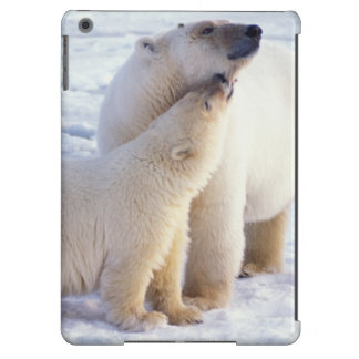Polar bear sow with cub, pack ice of the iPad air covers