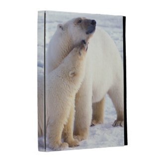 Polar bear sow with cub, pack ice of the iPad folio case