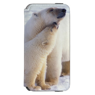 Polar bear sow with cub, pack ice of the iPhone 6/6s wallet case