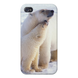 Polar bear sow with cub, pack ice of the cases for iPhone 4