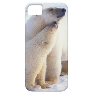 Polar bear sow with cub, pack ice of the iPhone SE/5/5s case