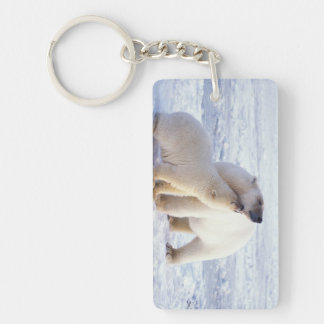 Polar bear sow with cub, pack ice of the keychain