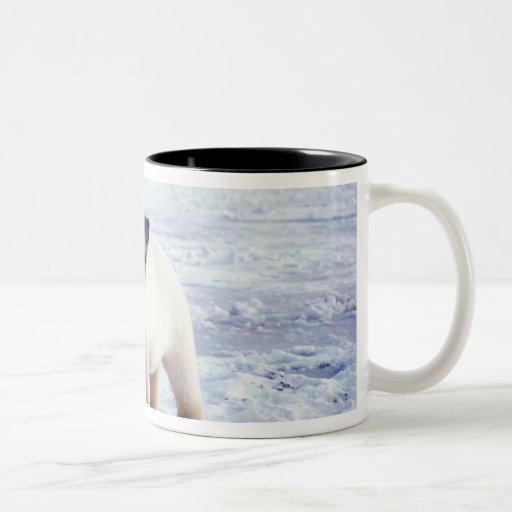 Polar bear sow with cub, pack ice of the coffee mug
