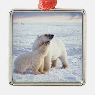 Polar bear sow with cub, pack ice of the square metal christmas ornament