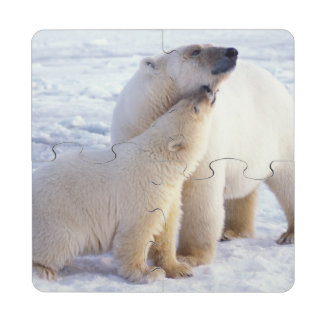 Polar bear sow with cub pack ice of the puzzle coaster