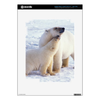 Polar bear sow with cub, pack ice of the skin for iPad 3