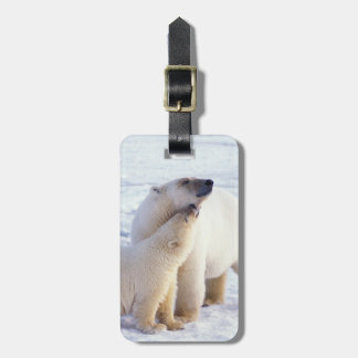 Polar bear sow with cub, pack ice of the tag for luggage