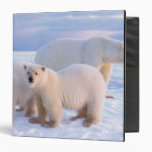 Polar bear sow with cubs on pack ice, coastal 3 ring binder