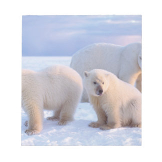 Polar bear sow with cubs on pack ice of coastal notepad