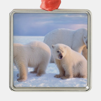 Polar bear sow with cubs on pack ice of coastal square metal christmas ornament