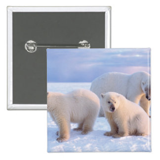 Polar bear sow with cubs on pack ice of coastal pinback button