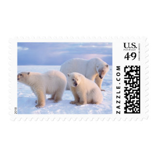 Polar bear sow with cubs on pack ice of coastal postage stamp