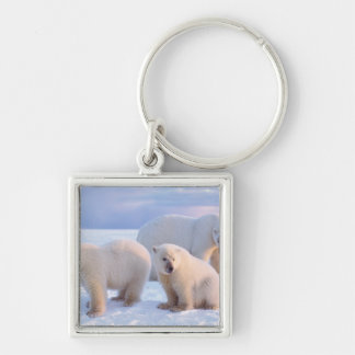 Polar bear sow with cubs on pack ice of coastal Silver-Colored square keychain