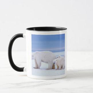 Polar bear sow with cubs on pack ice of mug
