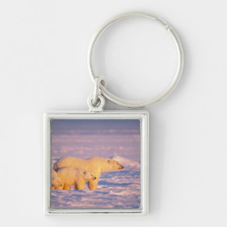 Polar bear sow with spring cubs on the frozen keychain