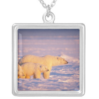 Polar bear sow with spring cubs on the frozen necklaces