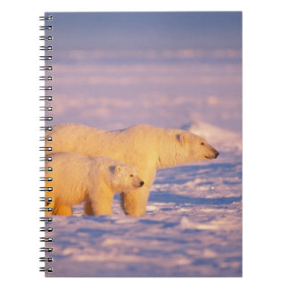 Polar bear sow with spring cubs on the frozen spiral notebook