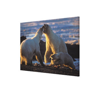 Polar bear sows with cub at side, 1002 coastal canvas print