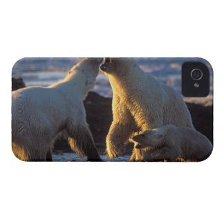 Polar bear sows with cub at side, 1002 coastal Case-Mate blackberry case