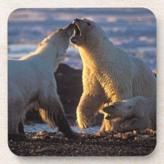 Polar bear sows with cub at side, 1002 coastal drink coaster