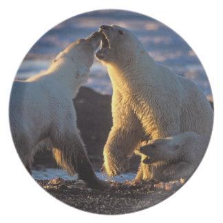 Polar bear sows with cub at side, 1002 coastal dinner plate
