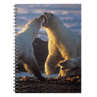 Polar bear sows with cub at side, 1002 coastal notebook