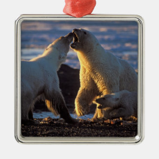 Polar bear sows with cub at side, 1002 coastal square metal christmas ornament